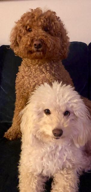 bpla_teddy and romeo